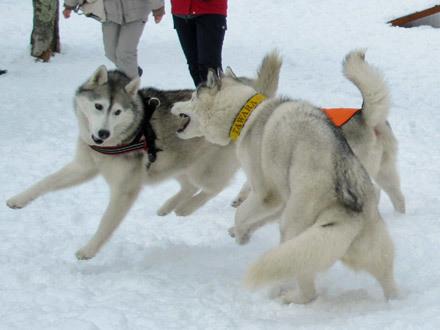雪遊びは最高