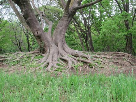 緑の野川公園