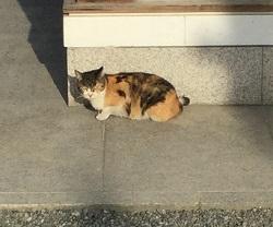 四天王寺中の猫