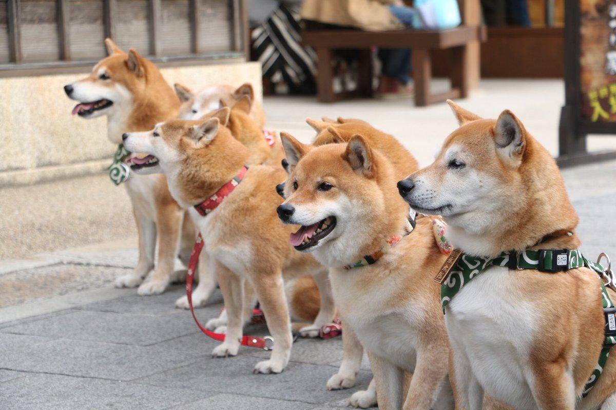 dog_20170308044501dd0.jpg