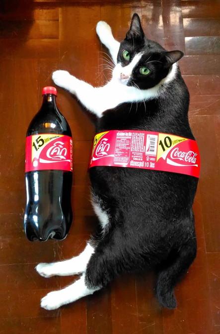 Coca Cola Cat