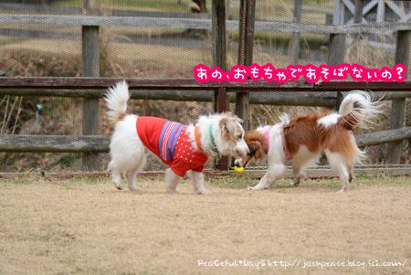 170206_yua8.jpg