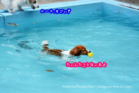 170406_pool.jpg