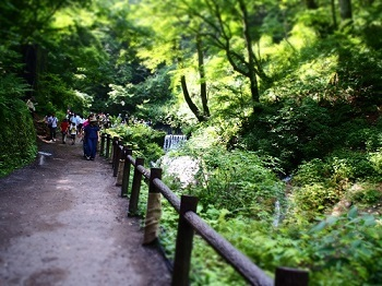 白糸の滝20160810-3