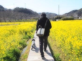 うちのこ記念旅行菜の花畑20170307-8