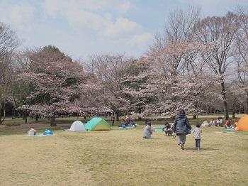 お花見20170402-4