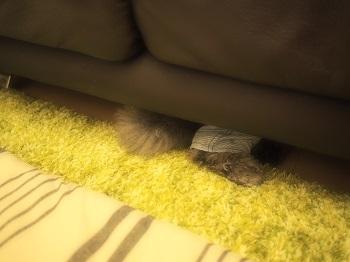 ソファーの下からこんにちは20170416-1