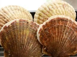 【漁業】 水産加工業(耳吊り)北海道でのホタテの養殖業務(未経験者歓迎!)