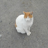 さきたま神社猫⑤