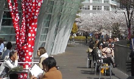 ⑮草間彌生展桜咲く景色
