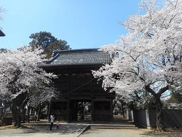 48 勝願寺の桜 20170407