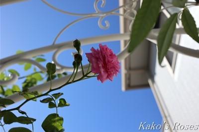 s-IMG_0064kako.jpg