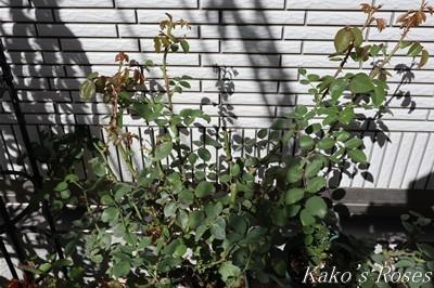 s-IMG_0066kako.jpg