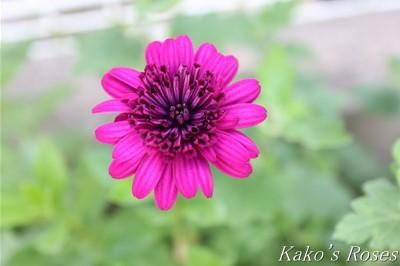 s-IMG_0067kako.jpg
