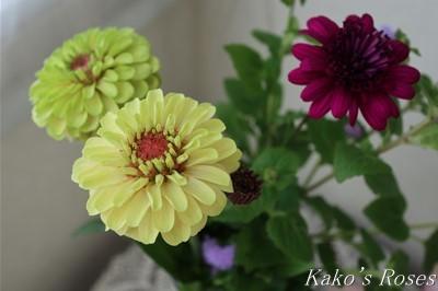 s-IMG_0068kako.jpg
