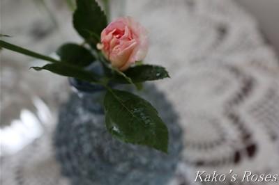 s-IMG_0077kako.jpg