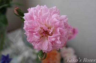 s-IMG_0093kako.jpg