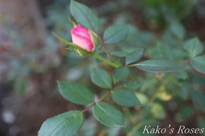 s-IMG_0095kako.jpg