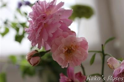 s-IMG_0102kako.jpg