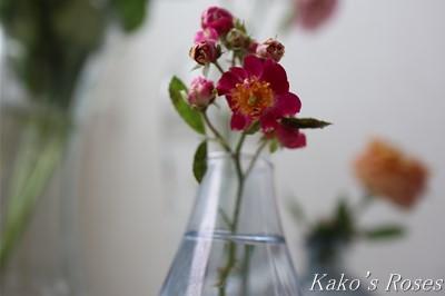 s-IMG_0104kako.jpg