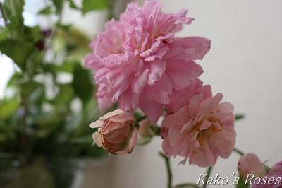 s-IMG_0108kako.jpg