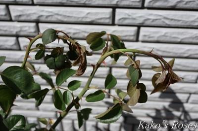 s-IMG_0113kako.jpg