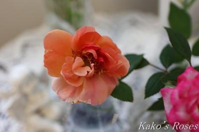 s-IMG_0119kako.jpg