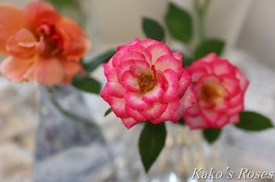 s-IMG_0120kako.jpg
