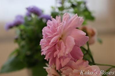 s-IMG_0121kako.jpg