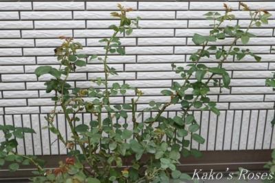 s-IMG_0125kako.jpg