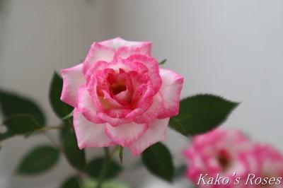 s-IMG_0132kako.jpg