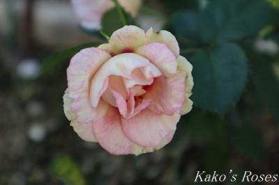 s-IMG_0137kako.jpg