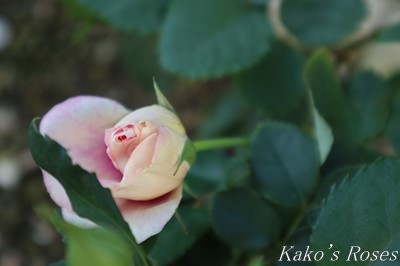 s-IMG_0138kako.jpg