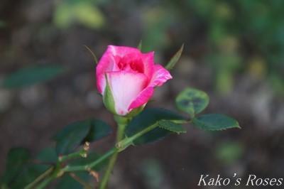 s-IMG_0139kako.jpg