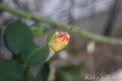 s-IMG_0175kako.jpg