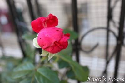 s-IMG_0185kako.jpg