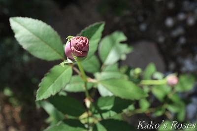 s-IMG_0189kako.jpg
