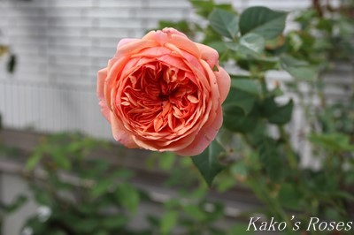 s-IMG_0200kako.jpg