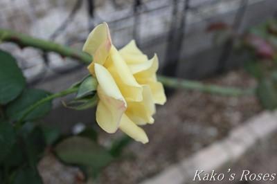 s-IMG_0202kako.jpg
