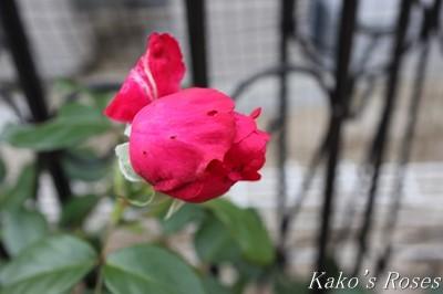 s-IMG_0204kako.jpg