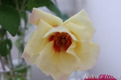 s-IMG_0210kako.jpg