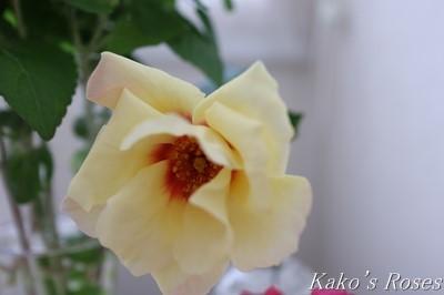 s-IMG_0211kako.jpg