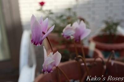 s-IMG_0213kako.jpg
