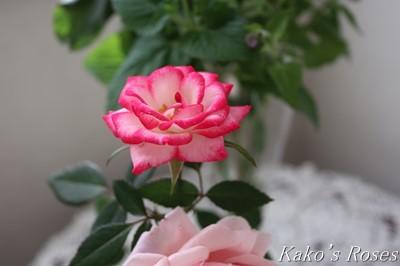 s-IMG_0226kako.jpg
