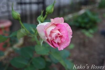 s-IMG_0233kako.jpg