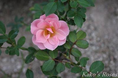 s-IMG_0249kako.jpg