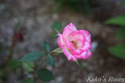 s-IMG_0259kako.jpg