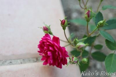 s-IMG_0283kako.jpg