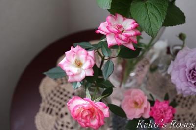 s-IMG_0303kako.jpg