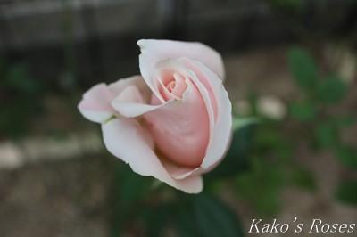 s-IMG_0308kako.jpg